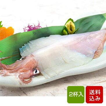 イカ 刺身用 2杯 呼子イカ 姿造り 玄界灘 おつまみ 海鮮 父の日 お中元 ギフト