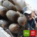 れんこん 無農薬 2キロ 白石レンコン 自然農法栽培蓮根 送料無料