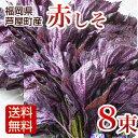 赤しそ 枝付き 2kg 8束 梅干し用 赤紫蘇ジュース用 福岡県芦屋産...