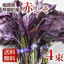 赤しそ 枝付き 1kg 4束 梅干し用 赤紫蘇ジュース用 福岡県芦屋産...