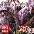 赤しそ 葉 5kg 20束 梅干し用 赤紫蘇ジュース用 【送料無料】