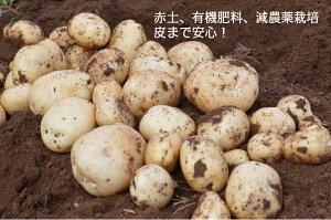 じゃがいも 5kg 出島 新ジャガイモ 長崎県島原産