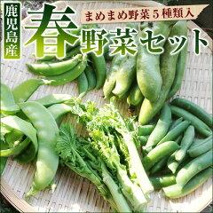 春のまめ豆野菜セット グリーンピース そらまめ スナップエンドウ いんげん 菜の花など春野菜5…