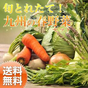 【送料無料】春野菜セット 春キャベツ、新たまねぎ、新じゃがいも、アスパラガス、蕾菜などの春の野…
