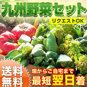 九州のとれたて 野菜セット 送料無料 ! 畑からご自宅まで最短翌日着!地元福岡の有機肥料で育て...