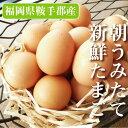 九州福岡県鞍手郡産野上さんちの朝とれたてたまご福岡ではブランド卵として有名!【九州】【卵...