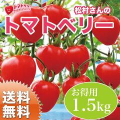 熊本県八代の松村さん トマトベリー(ミニトマト)です。いちごのような形で、フルーツ級の甘さ...
