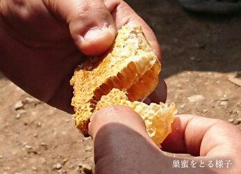 ネパールヒマラヤ山脈はちみつ300g【蜂蜜ハチミツ】
