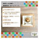 猫用スープ|Schesir(シシア)/シシアキャット猫用スープ ピンクサーモン&キャロット 85g×20袋【穀物不使用 一般食】 3