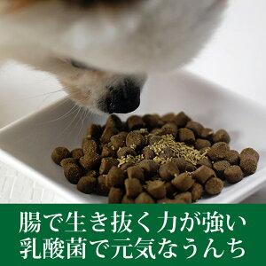 犬サプリメント/乳酸菌イーストスリム100g/老犬子犬にもおすすめ酵素5P13oct13_b【RCP】