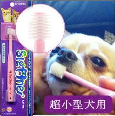 360°歯ブラシだから角度を気にせず簡単キレイ!猫ちゃんもOK! 【犬 歯磨き デンタルケア ...