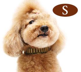 犬 首輪 ASHU ステップカラー S/ペット/小型犬/猫用 おしゃれで丈夫 トイプードル ダックス イ...