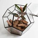 ガラスと真鍮でできた多面体テラリウム [大](63140) ...