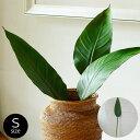 ストレリチアリーフ Sサイズ(65610)【観葉植物 フェイクグリーン...