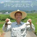 藤本浩二さんのジャンボにんにく 1kg / 無農薬・無化学肥料栽培 / 熊本阿蘇産 / 国産 / 2021年産