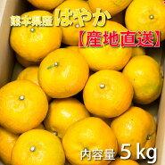 みかんミカン熊本みかん産地直送【予約受付】はやか5kg