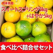 みかんミカン熊本みかん産地直送【予約受付】スイートスプリングとはやか食べ比べ詰合せセット10kg