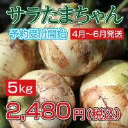 玉ねぎサラダたまねぎサラたまちゃんサラたま熊本県サラたまちゃん5kg