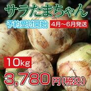 玉ねぎサラダたまねぎサラたまちゃんサラたま熊本県サラたまちゃん10kg