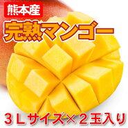 マンゴー完熟マンゴーマンゴー母の日熊本産完熟マンゴー(3L×2玉)