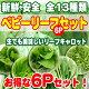 【ベビーリーフ】 葉物野菜 選べる 6袋セット【サラダ・和え物】【スムージーに】【水耕栽培…