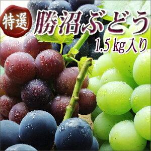 NHK「キッチンが走る!」で杉浦太陽さんから紹介された「ぶどうばたけ」の美味しいブドウ♪19種...