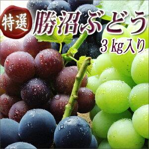 NHK「キッチンが走る!」で杉浦太陽さんから紹介された「ぶどうばたけ」の美味しいブドウ♪全19...