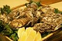 漁師をも唸らせた仙鳳趾の栄養と旨みをたっぷり抱えた旨い牡蠣北海道/釧路町仙鳳趾/殻付き牡蠣 ...