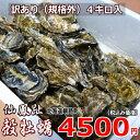 牡蠣70個前後/訳あり/ハネ/北海道/釧路町仙鳳趾/生牡蠣 4キロ