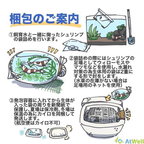 【条件付き】ダークブルーシュリンプ 5匹