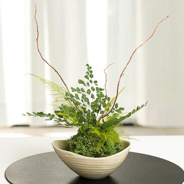 ◆観葉植物/苔玉(こけだま)◆送料無料【プリザーブドフラワーCT触媒】【あす楽対応_東海】