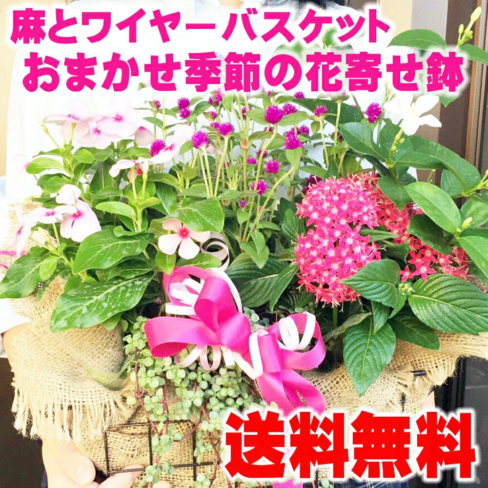 新鮮な花87navi【楽天市場】