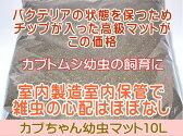 カブトムシ幼虫マット・カブちゃん幼虫マット 10L(カブトムシ幼虫用マット)【売れ筋】【オススメ】2017年9月5日13時から9月30日までポイント2倍
