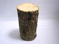 クヌギ産卵材(8cm前後)