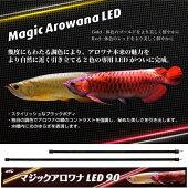 マジックアロワナ90R-1