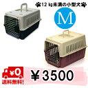 Img62264509