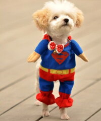 【メール便送料無料】愛犬がスーパーマンに!!スーパーマン☆/コスプレ【smtb-MS】【ドッグウェ...