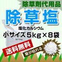 Ca5kgx8-s2
