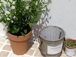 ~ 落ち着いた感のある庭造りのを楽しんでみませんか? ~ 少し白みがかったテラコッタ製の植...