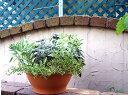 イタリア製 テラコッタ プランターボール 32cm スモールボール デローマ社 10号 植木鉢 葉牡丹 陶器鉢 素焼き鉢 スムースな風合いです 園芸 ガーデニング*Italian Terracotta*deroma