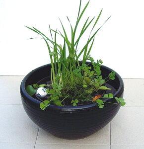 ビオトープ ガーデニング ガーデン スイレン