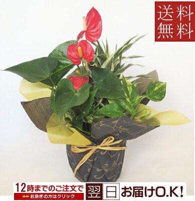 観葉植物 寄せ植え【開店祝い】【新築祝い】【誕生日】【退職祝い】【お中元】【敬老の日】