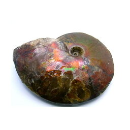 カナディアン アンモライト 原石 ジェムストーン スタンダード (68-996)