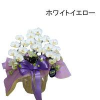 胡蝶蘭お供えミディ仏花お盆初盆新盆3本立ちホワイトイエロー黄色ピンクココキャンフラワー