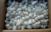 ブリード インセクトゼリー(ハイグレードタイプ)16gホワイト 500個入りケース 昆虫ゼリー カブトムシ、クワガタ用