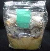 特選 カワラ菌床レイシ材(産卵木) 2本入りセット ☆クワガタの産卵、産卵床、オオクワの産卵
