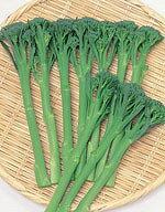 【ブロッコリー種子】スティックセニョール (サカタのタネ) 小袋
