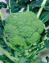 ブロッコリー種子 サカタのタネ 野菜の種 緑嶺 20ml