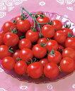 ミニトマト種子 タキイ種苗 CFココ 1000粒
