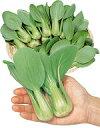 チンゲンサイ種子 サカタのタネ ミニチンゲンサイ シャオパオ 野菜の種 小袋 3ml